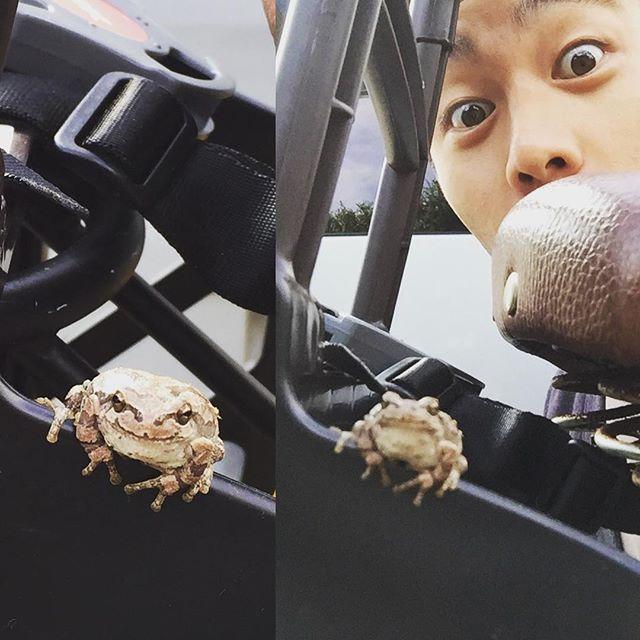 息子を保育園へ送った帰り、自転車を停めたらチャイルドシート下からもぞもぞ出てきた。にっこりかえるさん♪#カエル #かえる