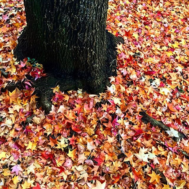 #autumn #秋