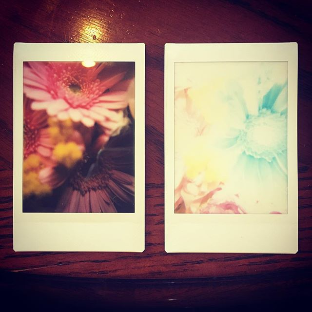 ロモインスタント、接写用のアタッチメントを付けて撮影。右なんて普通の写真としては完全に失敗なんだけど、アートとしては面白い。楽しいな〜♪#lomography #lomoinstant #instantcamera #instaxmini #flower #flowers #flowerstagram