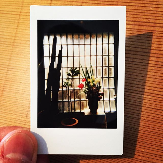 #lomography #lomoinstant #automat #instaxmini #instantcamera #light #flowers #flowerstagram #polaroid #plants #windows