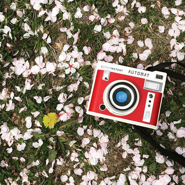 #lomography #lomoinstant #automat #sakura #cherryblossom #camera #instantcamera #たんぽぽ #桜 #japan