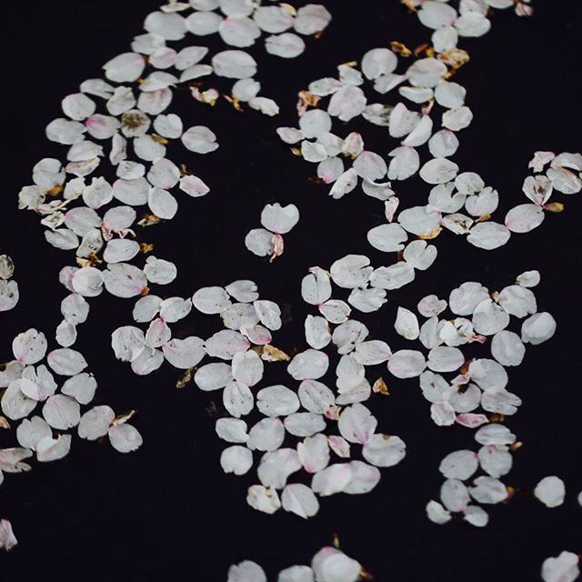 Sakura in the dark.#cherryblossom #桜 #darkness #eos #tamron #spring #japan #japon