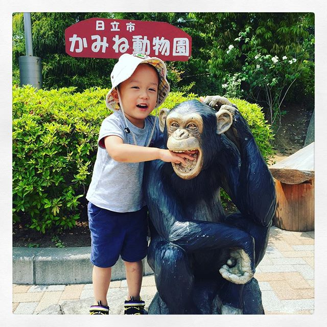 「ゾウさん行きたい!ゾウさん行きたい!」のリクエストにお応えして、男ふたり旅🚐#かみね動物園 #zoo #チンパンジー