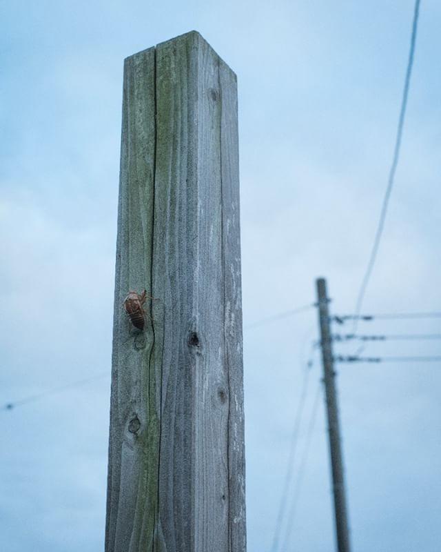 #夏の終わり #蝉 #蝉の抜け殻 #夕空 #photography #ファインダー越しの私の世界 #写真好きな人と繋がりたい #空 #igersjp #phos_japan #pics_jp #art_of_japan #イマソラ