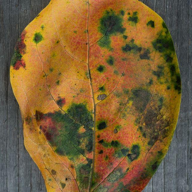 #秋の色 #落ち葉 #leaf #autumn #autumleaves #tsukuba #つくば #ibaraki  #instagramjapan #tokyocameraclub #igersjp #team_jp_ #reco_ig #hueart_life #rsa_social #indies_gram #whim_life #lifeispeople #as_archive #japan_daytime_view