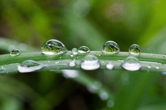 #rainyday #tsukuba #つくば #macro #マクロレンズ #ibaraki #nature